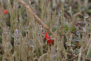 Druppeltjes aan het mos