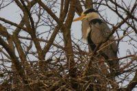 Bij het nest