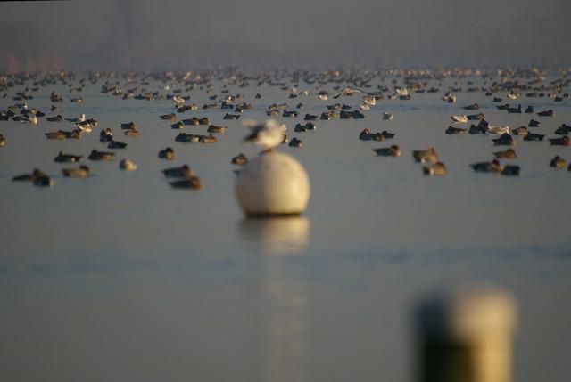 Nog nooit zoveel vogels op de plas gezien