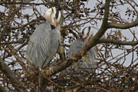 Gezellig op het nest