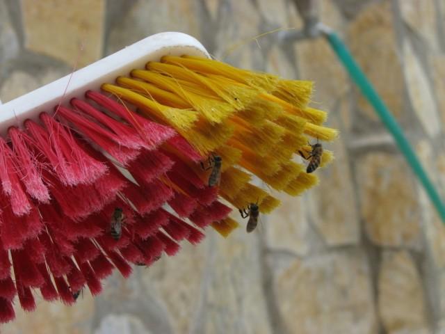 Bijen in de war met een bezem