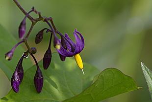 Minuscuul, maar prachtig bloemetje