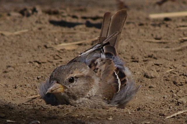 Musje in het zand