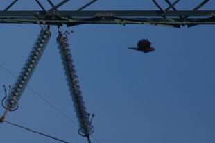 Roofvogel en mast