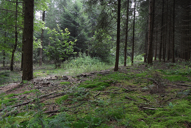De bossen van Doorn
