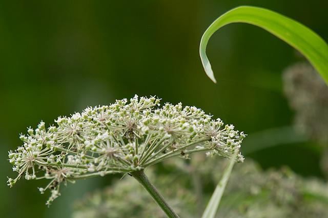 Zomaar een paar planten