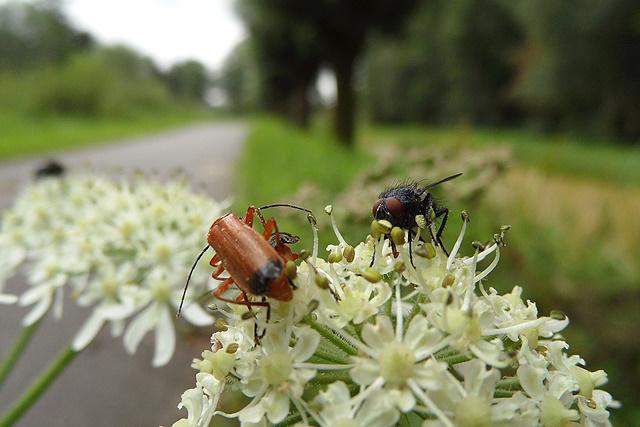 De een heeft oog voor nektar, de ander voor... weer een ander