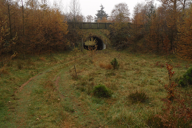 Wildtunnel