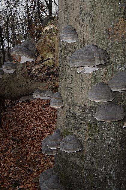 Boom vol paddenstoelen