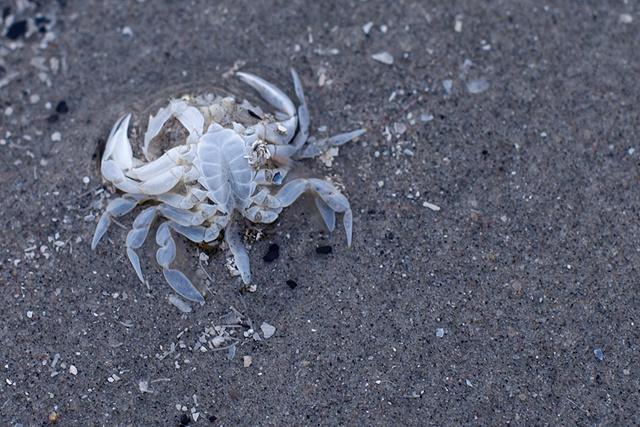 Transparant geworden krabbetje