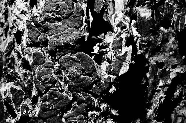 Schors in zwart-wit