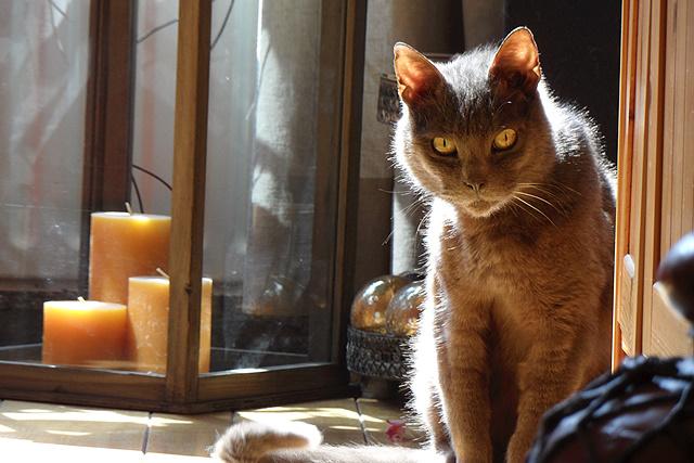 Hallo, ik ben muis en ik ben de baas in huis.
