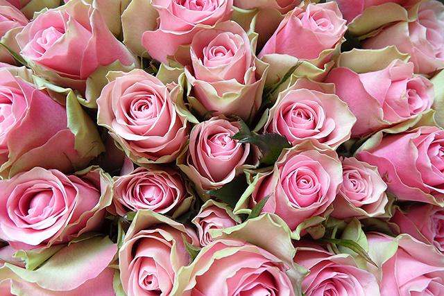 50 rozen voor de jarige