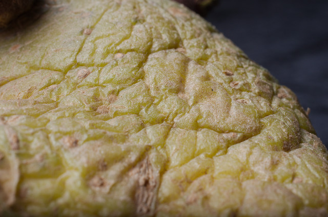 Aardappel_imgu1763
