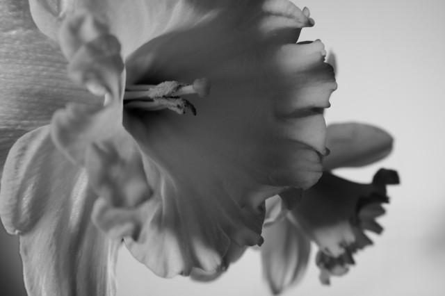 Narcis_imgu8141