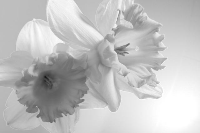Narcis_imgu8185_v2