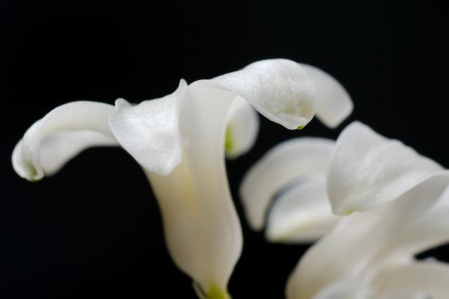hyacinth_imgu8877