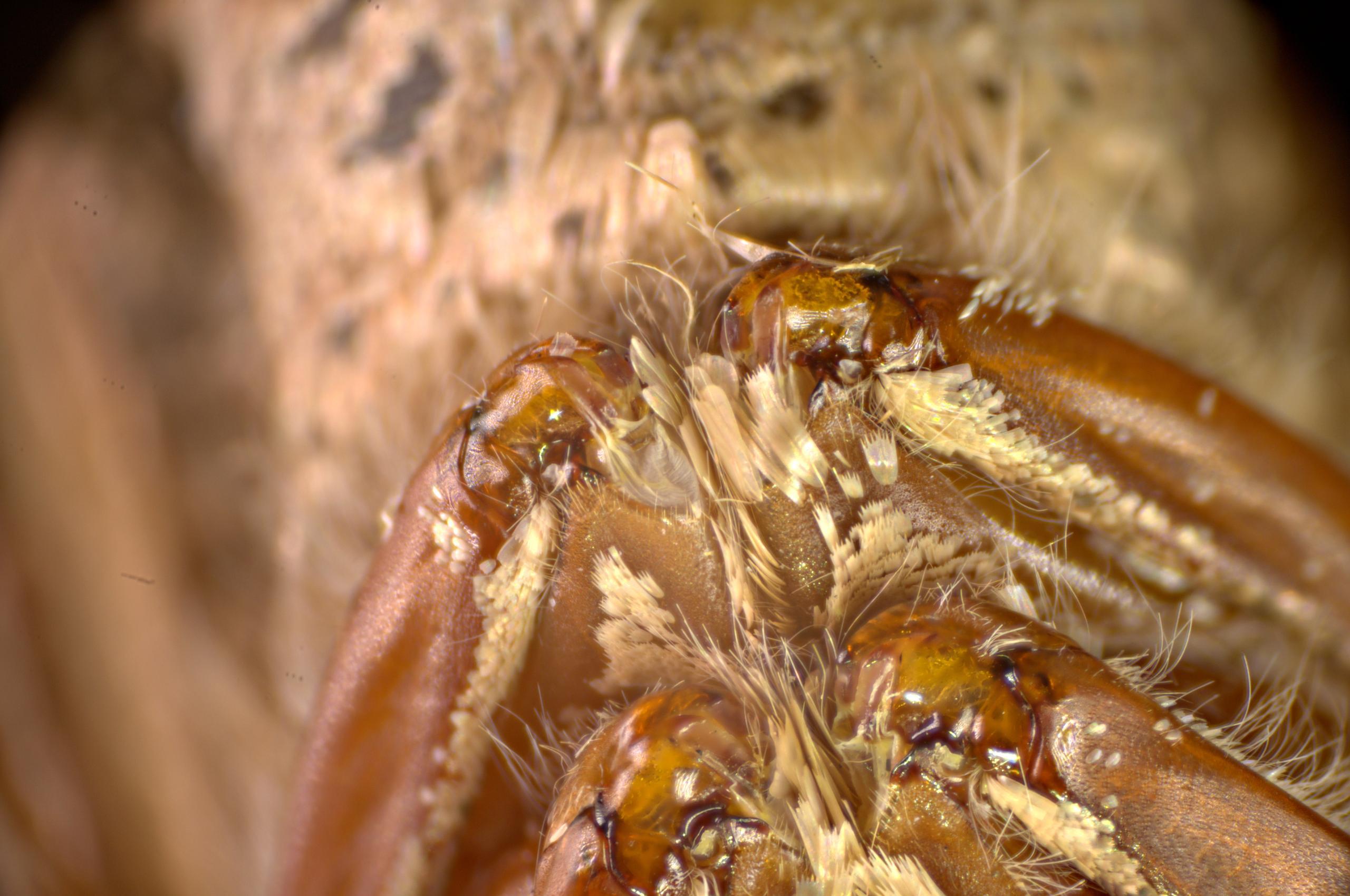Aar's log » nachtvlindertje