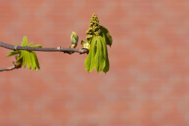 voorjaar_imgv4428