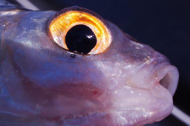 Detail van het schitterende oog